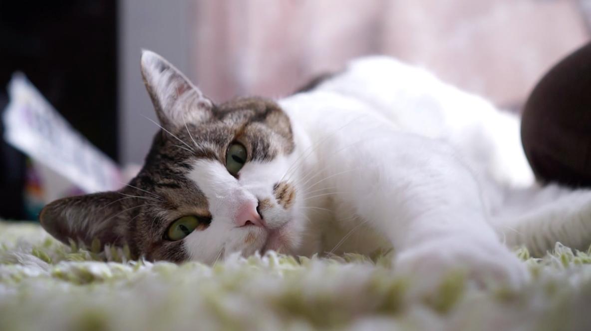 今日は「猫の日」! みんなの部屋に出演してくれた猫ちゃんたちを紹介します みんなの部屋