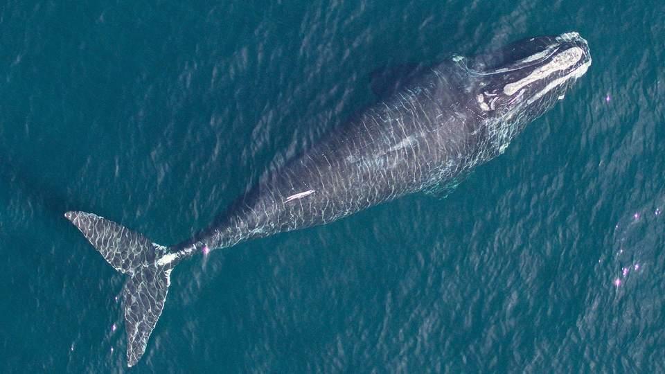 暑すぎる地球…クジラも小さくなってきたって知ってた?