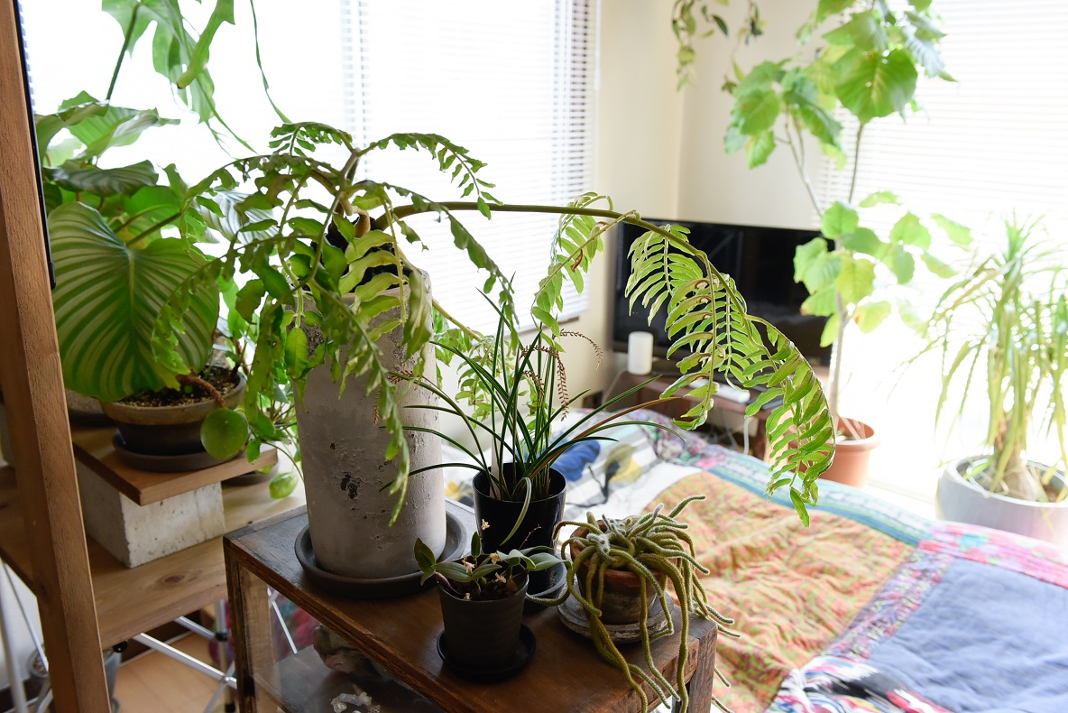 虫対策、みんなはこうしてる。観葉植物に虫がわかないアイデアまとめ
